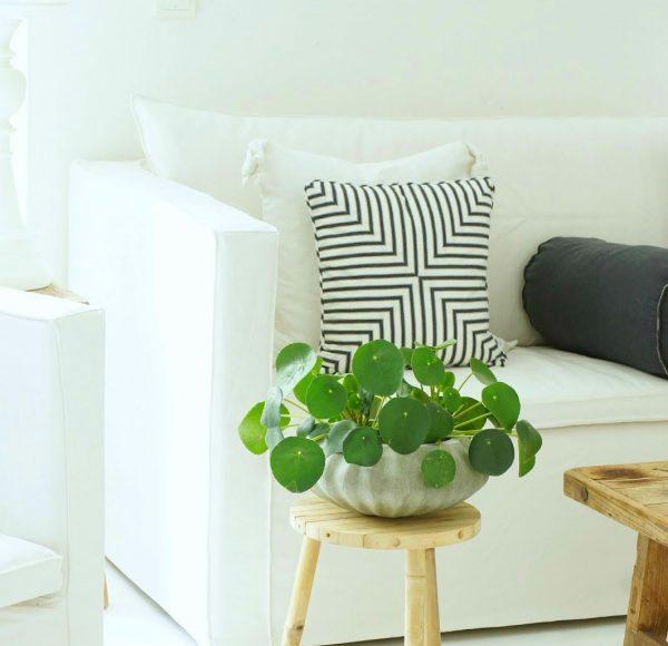 Indoor Plants _ Style GodsPilea-peperomioides-indoor-house-plant-600×904