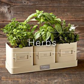 Indoor Plants _ Style Gods