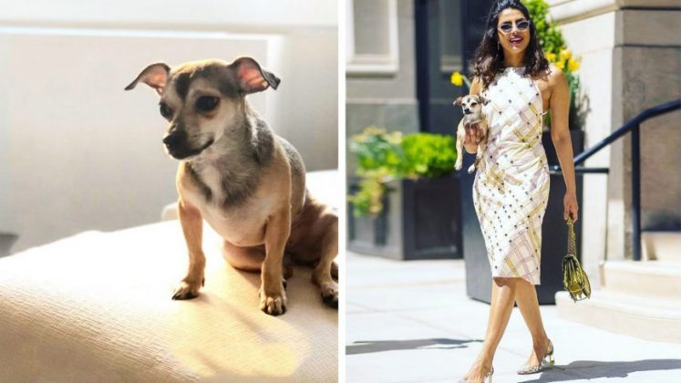 Pets Fashion _ Style gods