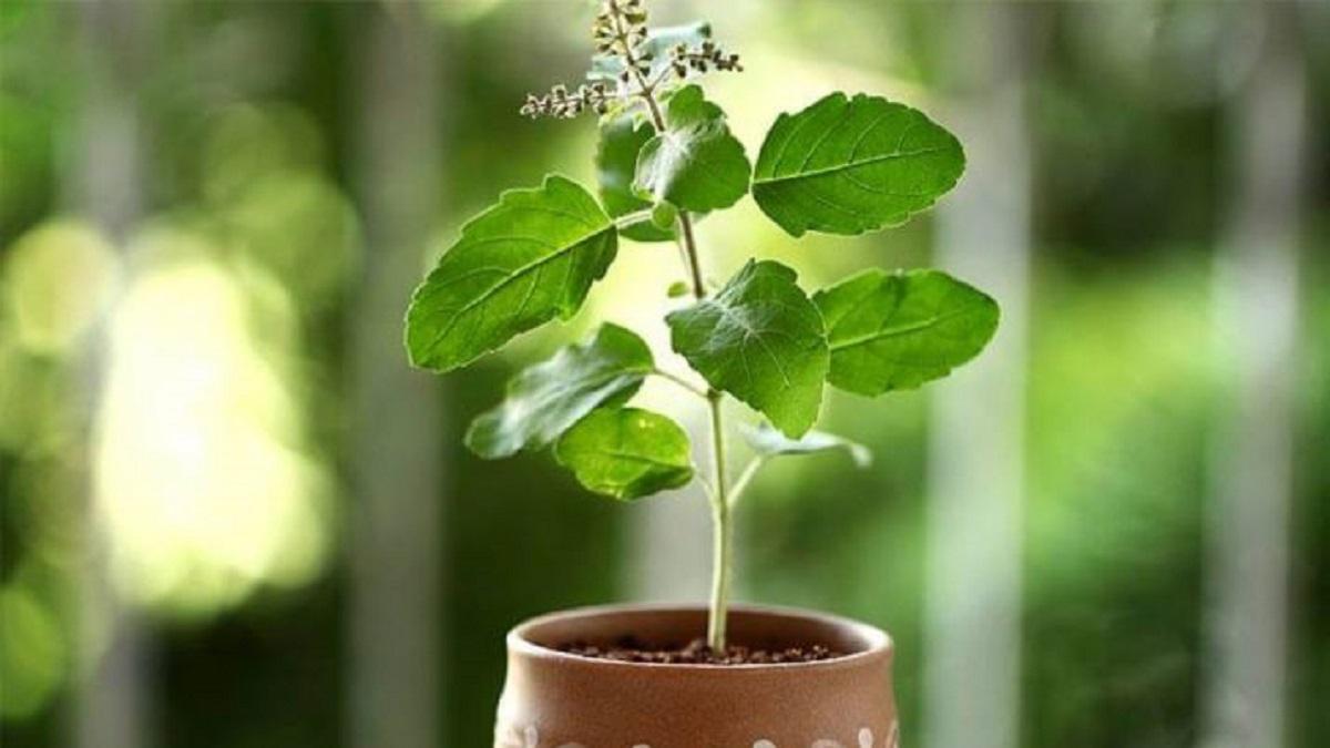 herbs-in-Ayurveda
