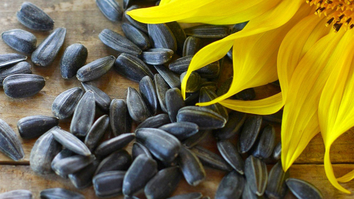 sunflower-seed-quality-nutrients